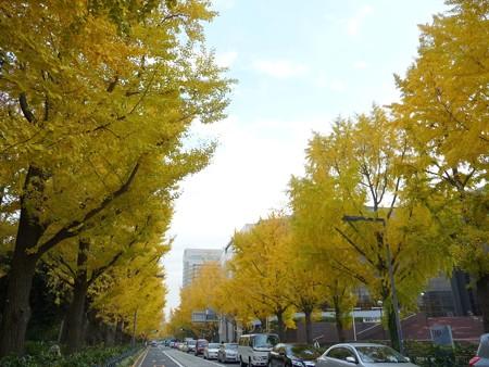 12.11/29 紅葉 山下公園通り (32)