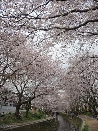 130329-大和 千本桜 (46)
