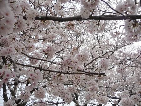130329-大和 千本桜 (54)