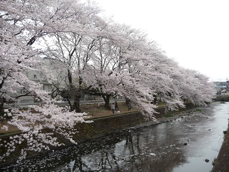 130329-大和 千本桜 (56)
