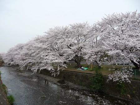 130329-大和 千本桜 (60)