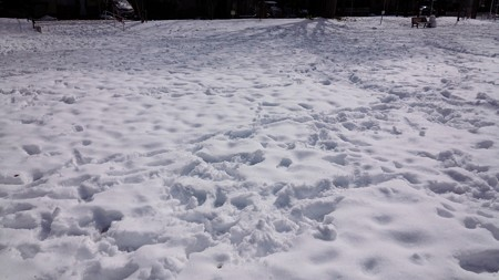 140209-雪 (15)
