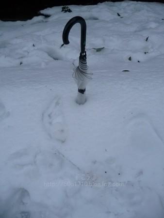 140215-雪 (37)