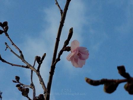 140322-桜 (3)