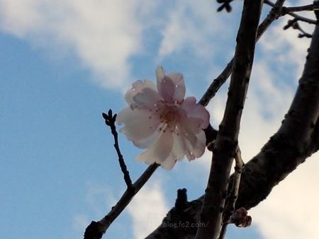 140322-桜 (4)