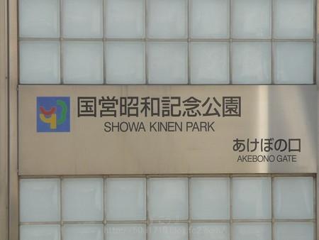 140408-昭和記念公園 (2)