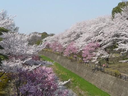 140408-昭和記念公園 (8)