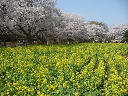 140408-昭和記念公園 (41)
