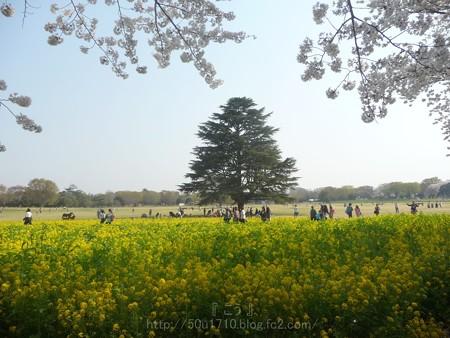 140408-昭和記念公園 (52)