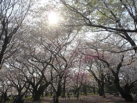 140408-昭和記念公園 (59)
