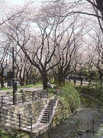 140407-千本桜 (8)