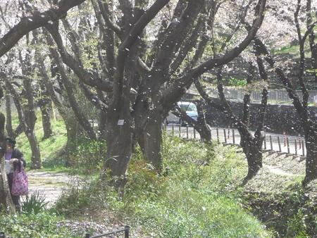 140407-千本桜 (10)