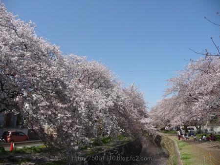 140407-千本桜 (34)