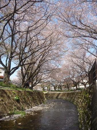 140407-千本桜 (38)