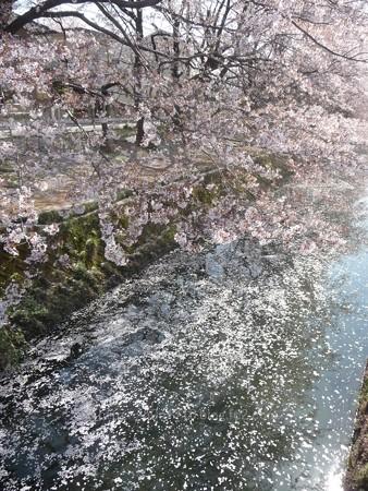 140407-千本桜 (58)