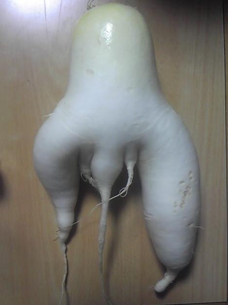 Photos: ウチで取れた大根にチンコが...