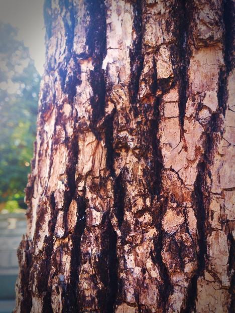 木肌。。。