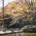 Photos: 公園の池には鴨が