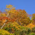 Photos: 会津紅葉_DSC_2961
