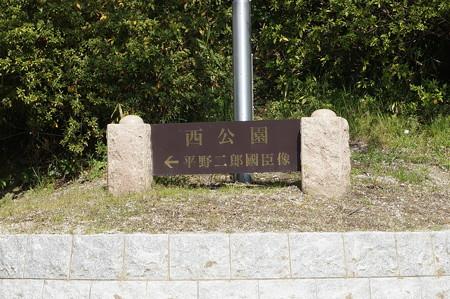 【さくら満開 写真】西公園 桜 福岡 2014年3月28日撮影 (12)
