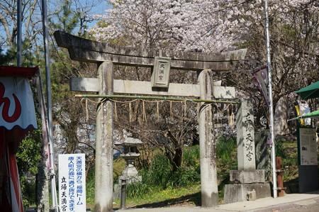 【さくら満開 写真】西公園 桜 福岡 2014年3月28日撮影 (16)