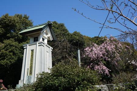 【さくら満開 写真】西公園 桜 福岡 2014年3月28日撮影 (40)