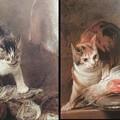 写真: シャルダンのねこ,ネコ,猫,拡大