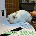 Photos: ピカイチ大賞