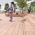 Photos: ころ吉ちゃん「夏の散歩」