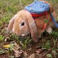 せんちゃん「秋を探してピクニック!」