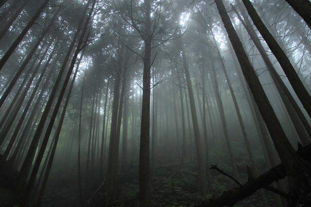 葛城高原登山コース