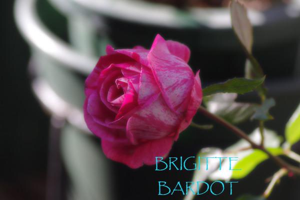 ブリジット・バルドーの画像 p1_26