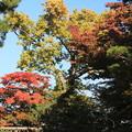 Photos: 藤田記念庭園・紅葉01-12.10.27