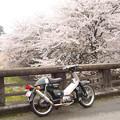 Photos: カブと桜