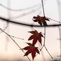 Photos: LR-20131208_170900