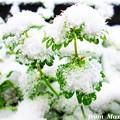 Photos: IMG_0224