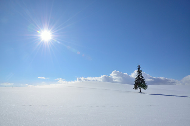 写真: 雪の砂漠