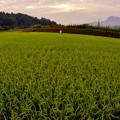 写真: 田園風景