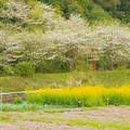 写真: 田園の色