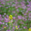 写真: 春の共演