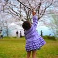 写真: 春をタッチ