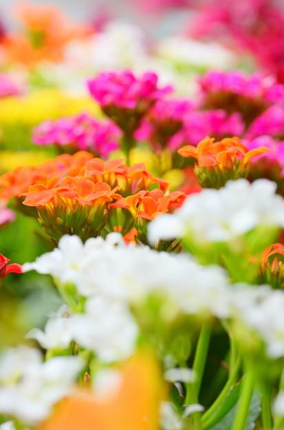 世界に花を。
