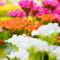 Photos: 世界に花を。
