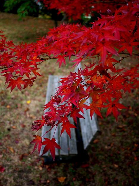 紅葉とベンチ