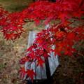 写真: 紅葉とベンチ