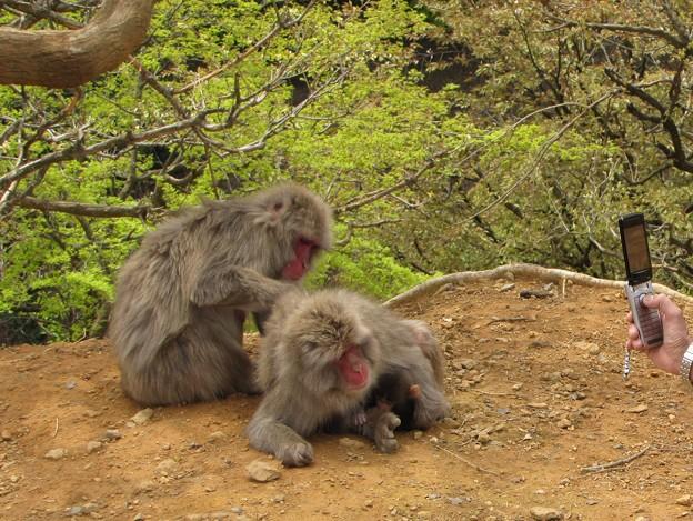 猿の家族 {2010年4月19日}