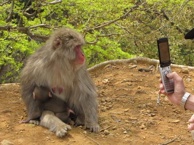 猿の親子 {2010年4月19日}