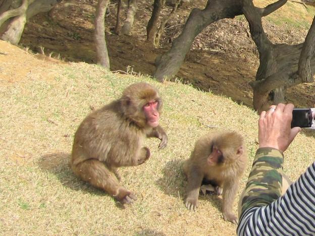 子猿の遊び {2010年19日}