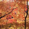 愛岐トンネル 紅葉 IMG_5223_2