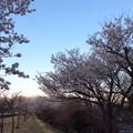 森林公園 大道平池の桜並木